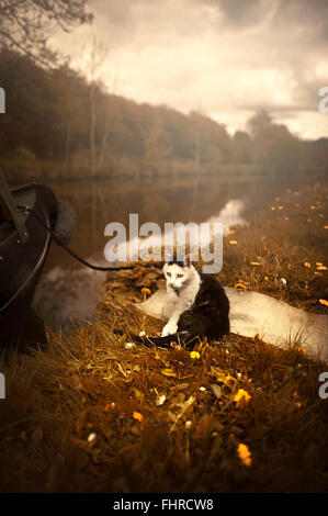 a black and white cat sitting by the boat by the river on grass Stock Photo