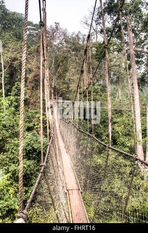 The hanging bridges for the canopy walk in Kakum national park, near Cape Coast in Ghana - Stock Photo