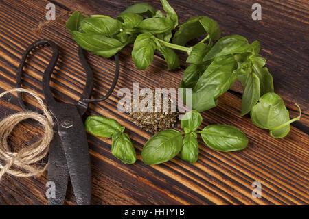Basil, Aromatic culinary herbs. - Stock Photo