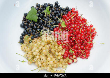 Ribes, Currants - Stock Photo