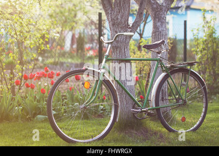 Old retro vintage bicycle in a garden parked on a lawn near a tree. Red tulips on a backround - Stock Photo