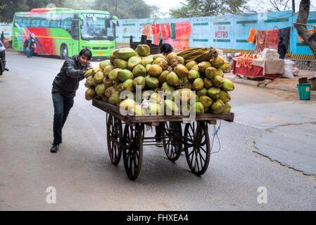 street vendor for coconuts in New Delhi, India, Asia - Stock Photo