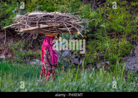 woman carrying firewood on her head in rural Rajasthan, India - Stock Photo