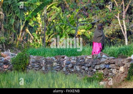 woman in a wheat field in rural Rajasthan, India - Stock Photo