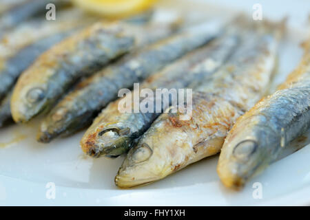 Fried sardines on a white plate - Stock Photo