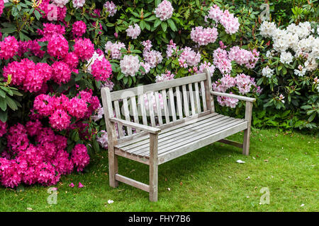 Rhododendron garden with wooden bench. - Stock Photo
