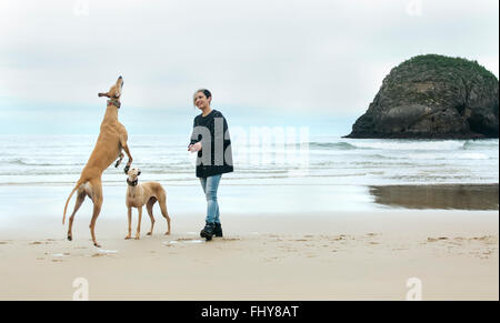 Spain, Llanes, young woman playing with her greyhounds on the beach - Stock Photo