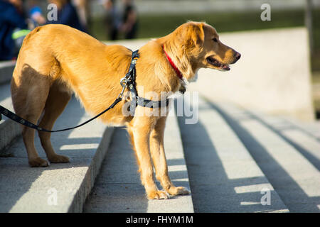 Beautiful dog on the stairs - Stock Photo