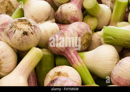Display of freshly harvested garlic at the farmers market.  Beaverton, Oregon Stock Photo