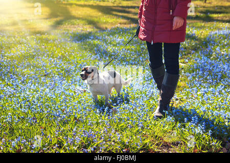 Young woman walking with a dog in park - Stock Photo