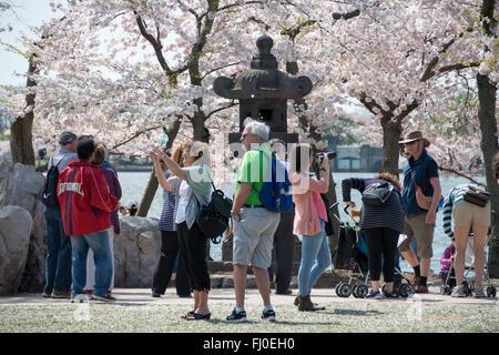 WASHINGTON DC, USA - Tourists next to the 16th century Japanese stone lantern next to the Tidal Basin, amongst the - Stock Photo
