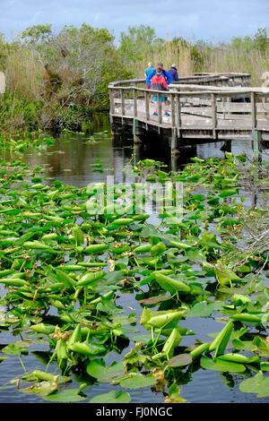 anhinga trail everglades national park florida - Stock Photo
