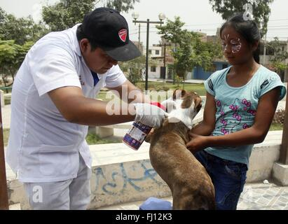 (160228) -- CARABAYLLO (PERU), Feb. 28, 2016 (Xinhua) -- A veterinarian applies an anti-fleas solution to a dog - Stock Photo