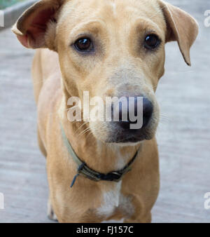 close up of sad dog - Stock Photo