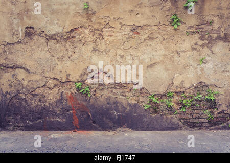 tree on old antique brick wall, vintage wall - Stock Photo
