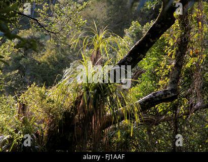 Jungle in the Abel Tasman National Park, New Zealand - Stock Photo
