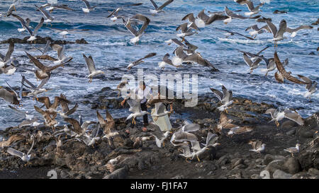Birds After The Fish El Golfo Lanzarote  Spain - Stock Photo