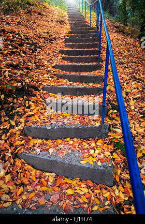 Stairs covered with autumn leaves - Stock Photo