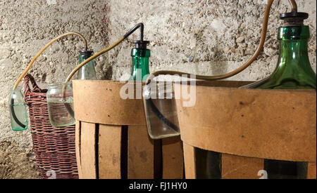 Process of a fermentation of wine in demijohn wine - Stock Photo