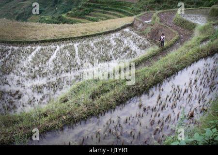 Worker in  rice terraces, Yuanyang, Guizhou,  China - Stock Photo