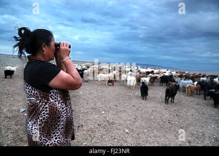 Nomad woman looking at her cattle with binoculars by sunset in Gobi desert,  Mongolia - Stock Photo