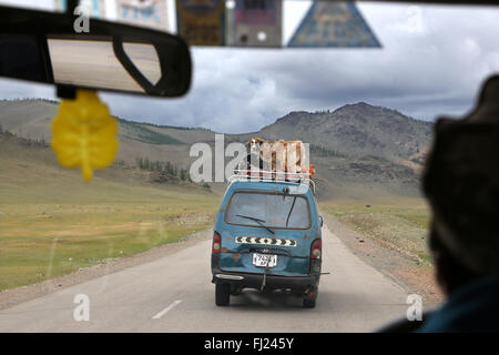 Dog transported on a car in Mongolia - Stock Photo