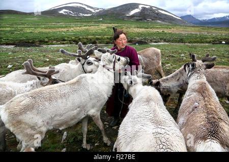Woman with reindeer, , Tsaatan Dukha people , nomadic reindeer herders , Mongolia - Stock Photo
