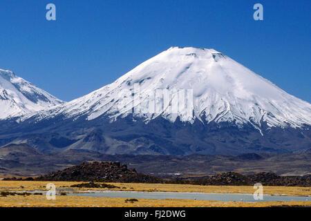 ALPACAS graze below the PAYACHATAS (twins), PAMERAPE (L) & PARINACOTA (R, 20,800 FT.) - LAUCA NATIONAL PARK, CHILE - Stock Photo