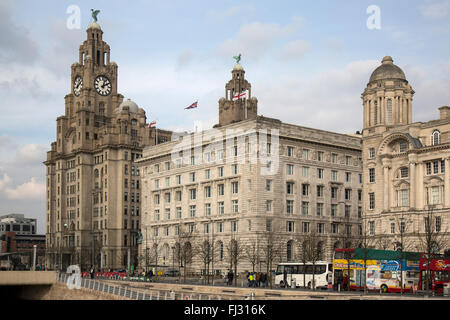 The Royal Liver Building in Liverpool, England, with the Cunard building alongside. - Stock Photo