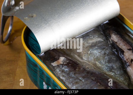 A macro image of canned, ready to eat, Moroccan Sardines in Sunflower oil presented in it's opened tin.