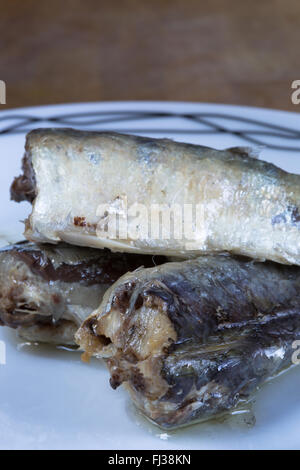 A macro image of canned, ready to eat, Moroccan Sardines in Sunflower oil presented on a white plate.