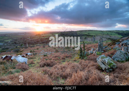 Moorland ponies grazing on Caradon Hill near Minions on Bodmin Moor in Cornwall - Stock Photo