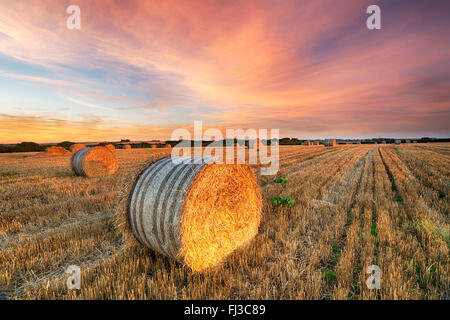 Beautiful sunset over a field of hay bales near Newquay in Cornwall - Stock Photo