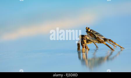 Macro photo of crab on the beach - Stock Photo