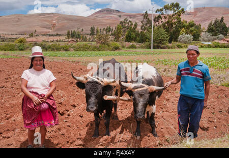 man and woman in traditional clothing with two stots at field work, Peru, Chinchero - Stock Photo