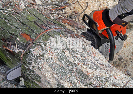 motor saw sawing through a tree trunk, Germany - Stock Photo