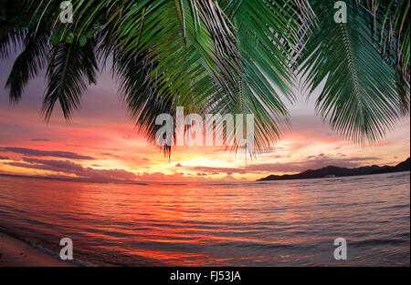 view through palm fronds onto the island praslin in evening glow, Seychelles, La Digue - Stock Photo