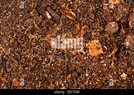 trapdoor spider (Liphistius thaleban), closed cave of a trapdoor spider - Stock Photo