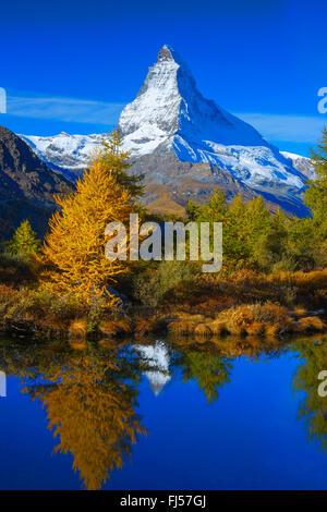 Matterhorn and larches mirroring on Lake Grindji, Switzerland, Valais - Stock Photo