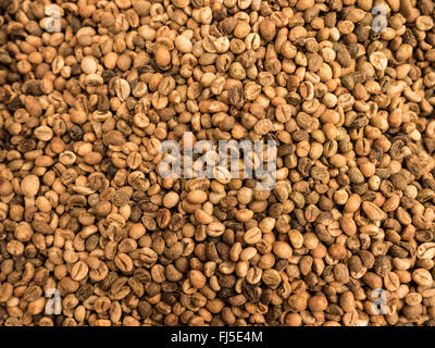 brown coffee beans dried prepare to roast as picture backdrop or background. - Stock Photo