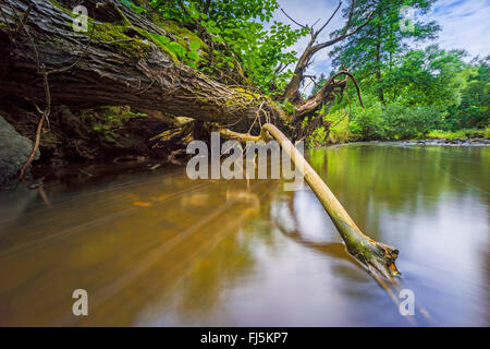 Fallen tree at lake shore, Germany, Saxony, Vogtlaendische Schweiz, Triebtal - Stock Photo