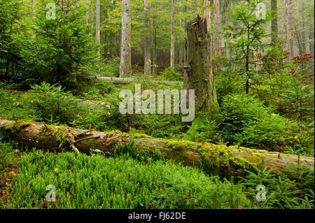 mountain , Germany, Bavaria, Bavarian Forest National Park, Sagwasser - Stock Photo