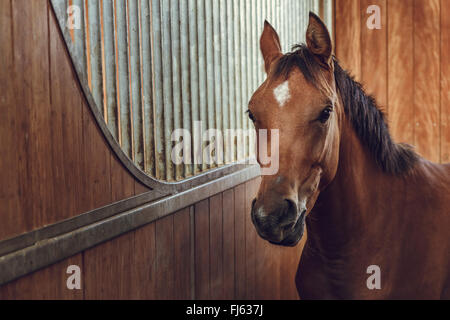 Portrait of an alert curious brown horse in a stable. - Stock Photo