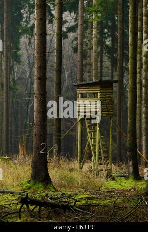 Norway spruce (Picea abies), raised hide in s spruce forest, Germany, North Rhine-Westphalia, Sauerland, Arnsberg - Stock Photo