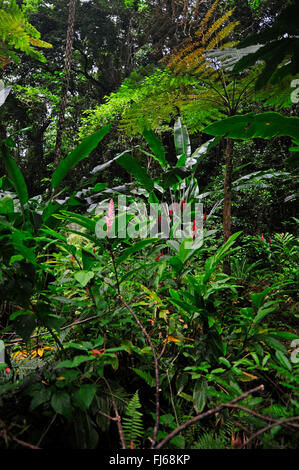 in the rainforest, New Caledonia, Ile des Pins - Stock Photo