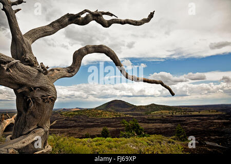 IDAHO - Root from fallen tree near summit of Inferno Cone with Broken Top in distance; Crater of the Moon National - Stock Photo