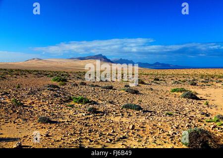 semi desert Istmo de la Pared, Canary Islands, Fuerteventura - Stock Photo