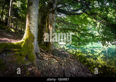 Old trees in the lake's shore. Virgin forests of Montenegro mountains - Stock Photo