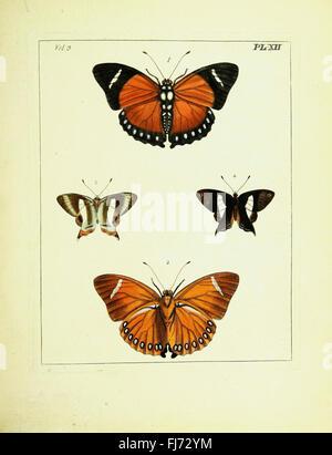 Natural History Xxxvii