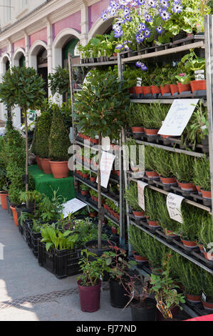 Rows of plants and shrubs in pots, for sale and displayed outside Paley's Fruit and Vegetable shop in Malton Market - Stock Photo